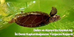 Didim ve Alanya'da Hayalet Ağ, İki Deniz Kaplumbağasının Yüzgecini Kopardı