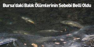 Bursa'daki Balık Ölümlerinin Sebebi Belli Oldu