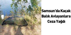 Samsun'da Kaçak Balık Avlayanlara Ceza Yağdı