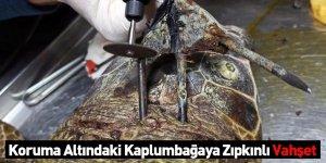 Koruma Altındaki Kaplumbağaya Zıpkınlı Vahşet