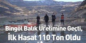 Bingöl Balık Üretimine Geçti, İlk Hasat 110 Ton Oldu