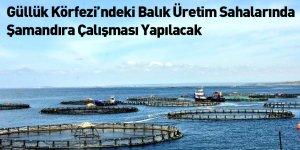Güllük Körfezi'ndeki Balık Üretim Sahalarında Şamandıra Çalışması Yapılacak