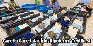 Caretta Carettalar İçin 'Hipotermi' Tehlikesi