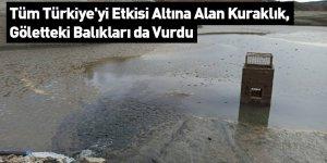 Tüm Türkiye'yi Etkisi Altına Alan Kuraklık, Göletteki Balıkları da Vurdu