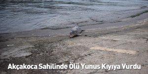 Akçakoca Sahilinde Ölü Yunus Kıyıya Vurdu