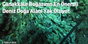 Çanakkale Boğazının En Önemli Deniz Doğa Alanı Yok Oluyor