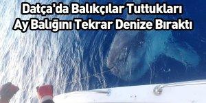 Datça'da Balıkçılar Tuttukları Ay Balığını Tekrar Denize Bıraktı