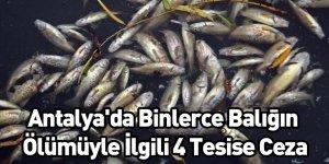 Antalya'da Binlerce Balığın Ölümüyle İlgili 4 Tesise Ceza