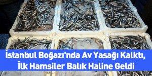 İstanbul Boğazı'nda Av Yasağı Kalktı, İlk Hamsiler Balık Haline Geldi