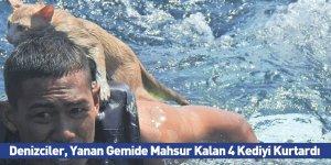 Denizciler, Yanan Gemide Mahsur Kalan 4 Kediyi Kurtardı