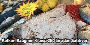 Kalkan Balığının Kilosu 250 Liradan Satılıyor