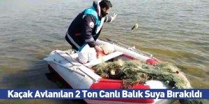 Kaçak Avlanılan 2 Ton Canlı Balık Suya Bırakıldı