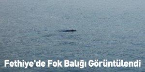 Fethiye'de Fok Balığı Görüntülendi