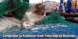 Zonguldak'ta Kaybolan Kedi Tekirdağ'da Bulundu