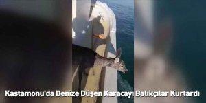 Kastamonu'da Denize Düşen Karacayı Balıkçılar Kurtardı