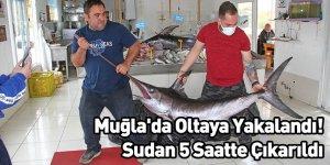 Muğla'da Oltaya Yakalandı! Sudan 5 Saatte Çıkarıldı