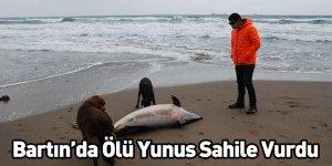 Bartın'da Ölü Yunus Sahile Vurdu