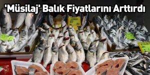 'Müsilaj' Balık Fiyatlarını Arttırdı