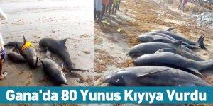 Gana'da 80 Yunus Kıyıya Vurdu