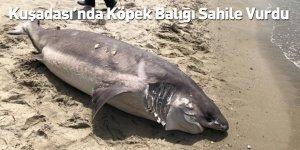 Kuşadası'nda Köpek Balığı Sahile Vurdu