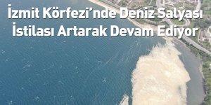 İzmit Körfezi'nde Deniz Salyası İstilası Artarak Devam Ediyor