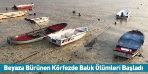 Beyaza Bürünen Körfezde Balık Ölümleri Başladı