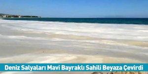 Deniz Salyaları Mavi Bayraklı Sahili Beyaza Çevirdi