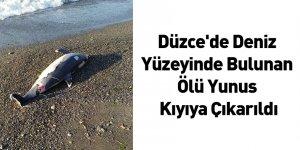 Düzce'de Deniz Yüzeyinde Bulunan Ölü Yunus Kıyıya Çıkarıldı