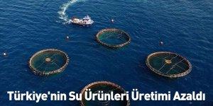 Türkiye'nin Su Ürünleri Üretimi Azaldı