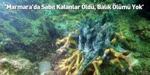 'Marmara'da Sabit Kalanlar Öldü, Balık Ölümü Yok'
