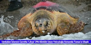 Uydudan İzlenen Caretta 'Likya' 296 Günlük Uzun Yolculuğu Sonunda Tunus'a Ulaştı