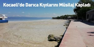 Kocaeli'de Darıca Kıyılarını Müsilaj Kapladı