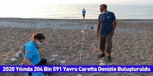 2020 Yılında 204 Bin 591 Yavru Caretta Denizle Buluşturuldu