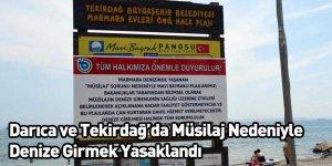 Darıca ve Tekirdağ'da Müsilaj Nedeniyle Denize Girmek Yasaklandı