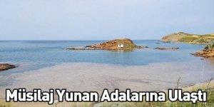 Müsilaj Yunan Adalarına Ulaştı