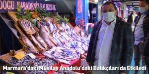 Marmara'daki Müsilajı Anadolu'daki Balıkçıları da Etkiledi