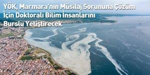 YÖK, Marmara'nın Müsilaj Sorununa Çözüm İçin Doktoralı Bilim İnsanlarını Burslu Yetiştirecek