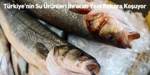 Türkiye'nin Su Ürünleri İhracatı Yeni Rekora Koşuyor
