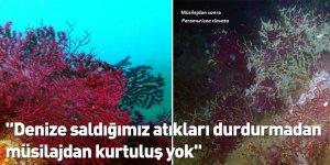 """""""Denize saldığımız atıkları durdurmadan müsilajdan kurtuluş yok"""""""