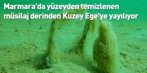 Marmara'da yüzeyden temizlenen müsilaj derinden Kuzey Ege'ye yayılıyor
