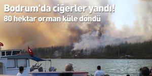 Bodrum'da ciğerler yandı! 80 hektar orman küle döndü