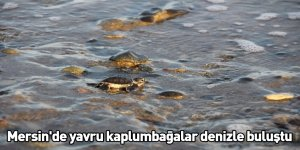 Mersin'de yavru kaplumbağalar denizle buluştu