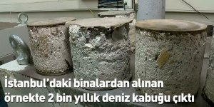 İstanbul'daki binalardan alınan örnekte 2 bin yıllık deniz kabuğu çıktı