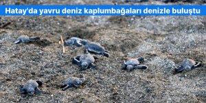 Hatay'da yavru deniz kaplumbağaları denizle buluştu