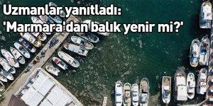 Uzmanlar yanıtladı: 'Marmara'dan balık yenir mi?'