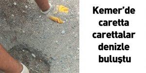 Kemer'de caretta carettalar denizle buluştu