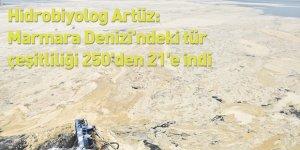 Hidrobiyolog Artüz: Marmara Denizi'ndeki tür çeşitliliği 250'den 21'e indi