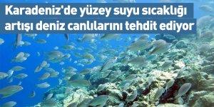 Karadeniz'de yüzey suyu sıcaklığı artışı deniz canlılarını tehdit ediyor