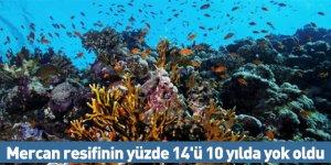 Mercan resifinin yüzde 14'ü 10 yılda yok oldu