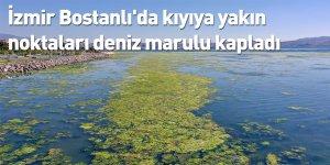 İzmir Bostanlı'da kıyıya yakın noktaları deniz marulu kapladı